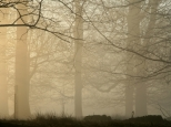foggy-winter-wood-in-kent